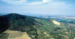 A tokaji Nagykopasz hegy